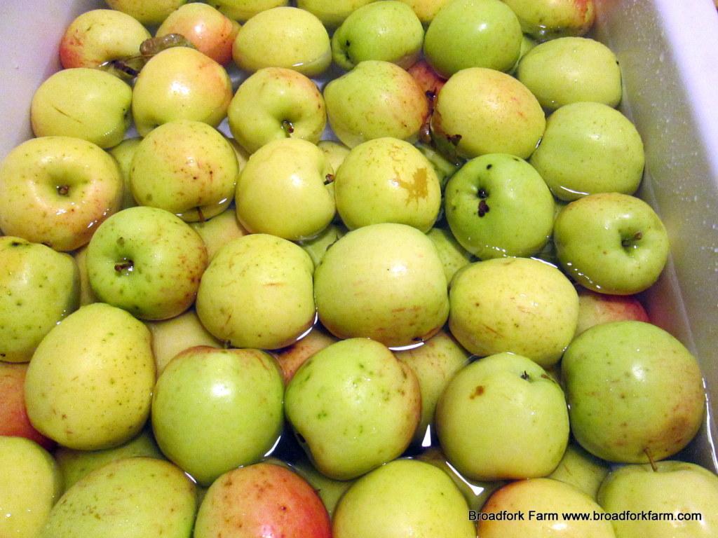 Broadfork Farm apples