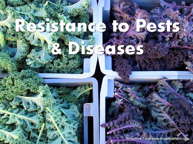 Vegetable variety resistance